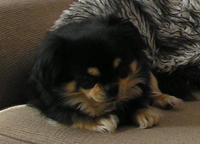 My beautiful boy Benson
