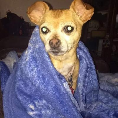 In her blanket