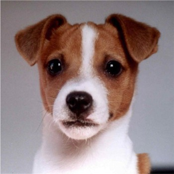 Duddly as a puppy