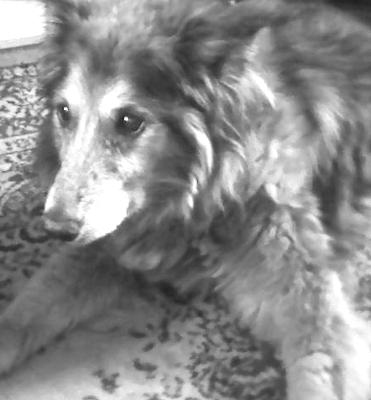 Holly - 1994 to 2010