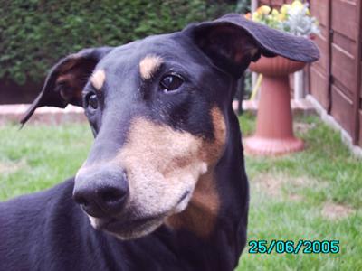 Kizzie 1996-2009 Rest in Peace