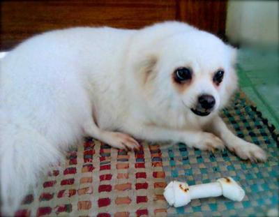Our very dear dog... Laika