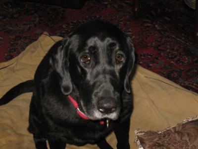 Lucy (my best friend)