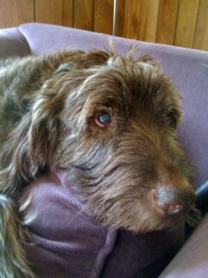 Max's Last Picture