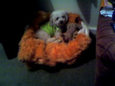 My Angel Toto
