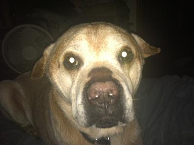 My Napi Dawg