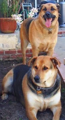 Sebastian and his brother Harley