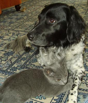 That´s Nicky with a kitten she rescued once