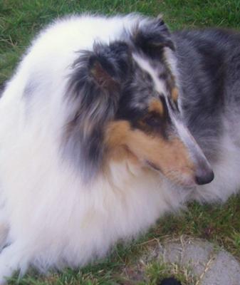 Cody's profile