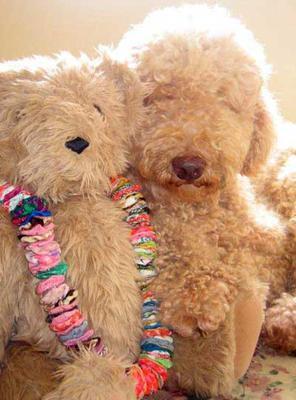 Teddy Bear Valentine