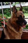 Rocky the Dog