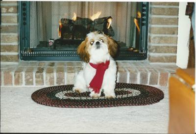 Roxy's First Christmas-Dec. 1996