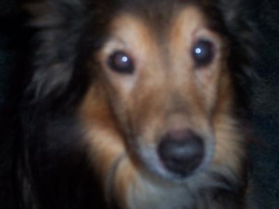 Moll Dog