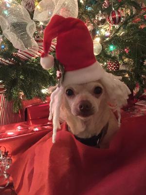 Her last Christmas, 2016