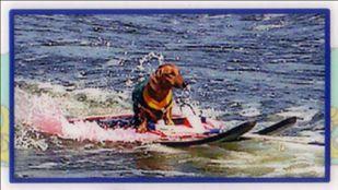 Fritz skiing at the lake