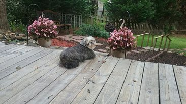 Chillin' on the deck