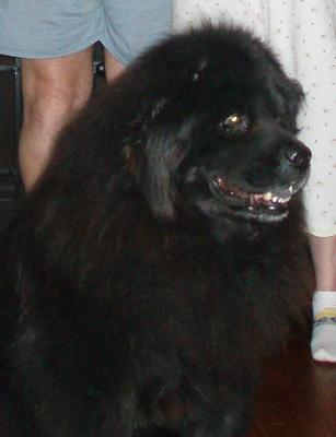 Little Bear Clark 2001-2014