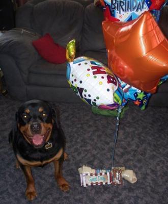 Happy Zeus on his 5th Birthday 5/22/2010